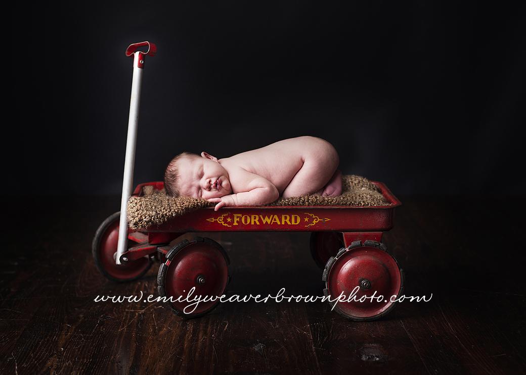 Baby Amalia |Seattle Newborn Photographer